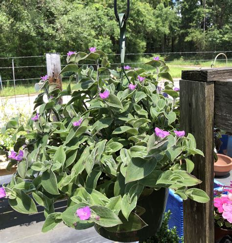 a bloom garden center landscaping mobile al