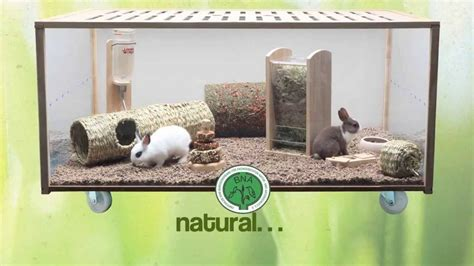 living world green peque 241 os animales