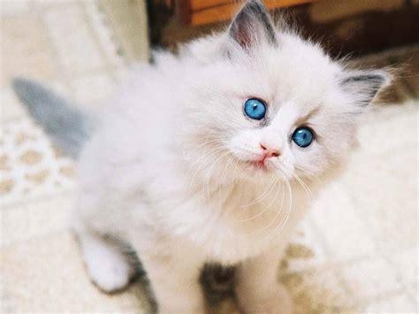 Mainan Tikus Bulu Mainan Kucing Anjing 3 jenis hewan peliharaan rumah rumahdewi