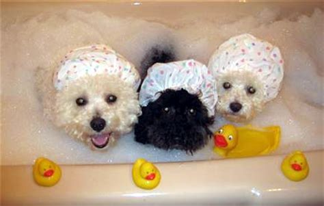 dogs bathtub silly dogs it s fun to play doggie dress up