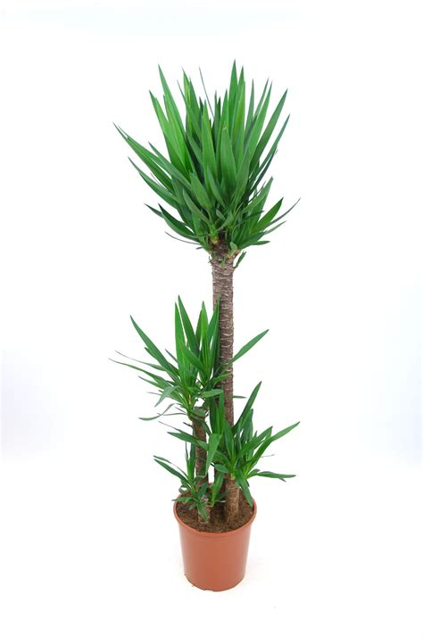 Pot Pour Plante Verte by Plante