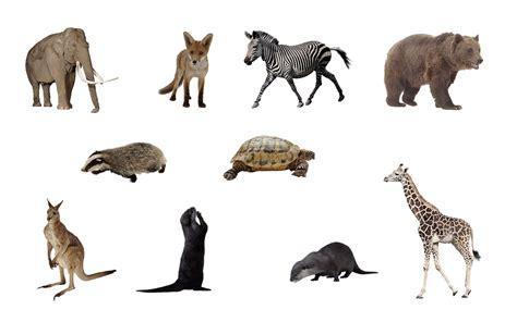 Kaos Deer 08 bahan edit foto format png binatang
