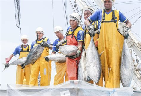 peru seafood fishing industry companies d j info peruvian fish landings rise 40 in december undercurrent