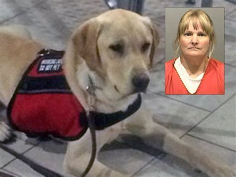diabetic service dogs cost the entirelypets weekly recap july 21 25 2014 entirelypets