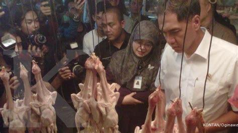 Doc Ayam Malindo japfa dan malindo perbesar bibit ayam