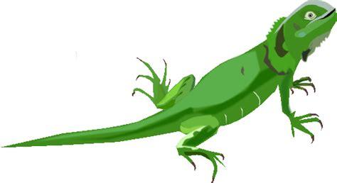 imagenes animadas de iguanas iguana para ni 241 os imagui