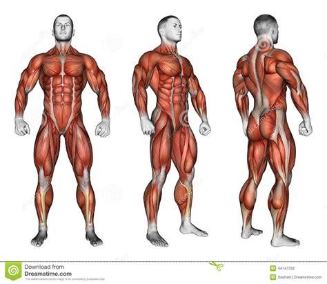 pendant l s exercer projection du corps humain montrant tous les