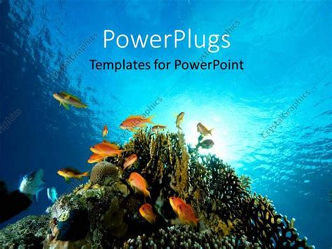 Powerpoint Template Floor Bed Of Red Sea With Coral And Fish Swimming 8426 Coral Reef Powerpoint Template Free