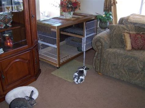 rabbit in bedroom awesome indoor rabbit cage website also has tons of good