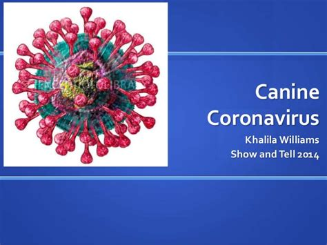 coronavirus in dogs canine coronavirus