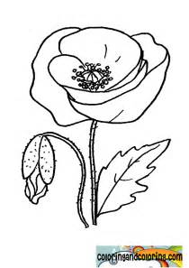 poppy color free anzac day poppy flower coloring pages