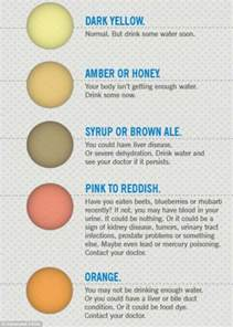 early pregnancy urine color 7 urine colors that reveal important things about your