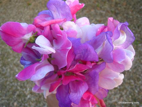 Sweet Blooms by A Pretty Sweet Pea Posy From Our Garden Grow Your Own