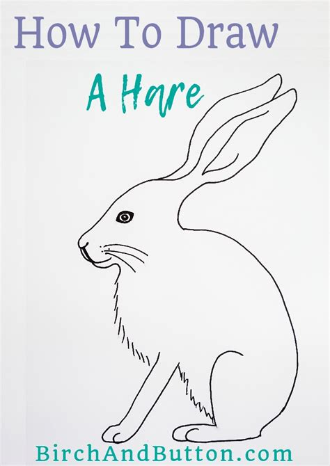 How To Draw A Hare how to draw a hare birch and button