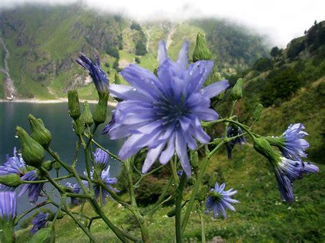 fiori di bach immagini i fiori di bach immagini dei 38 fiori di bach