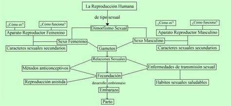 cuadro sinoptico aparato reproductor femenino cuadros sin 243 pticos sobre la reproducci 243 n humana y