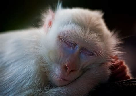 test sugli animali olaplex no ai test sugli animali op cosmetics