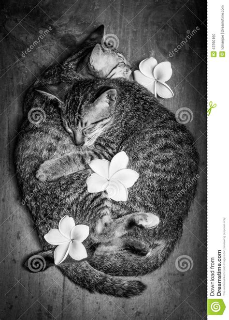 of cats stock photo image 43760160
