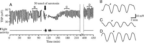 referred shoulder pain after c section oscillations of the transepithelial potential of moth