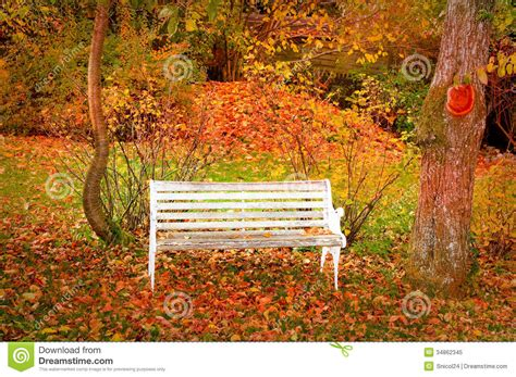 bench in forest bench in autumn forest royalty free stock photo image 34862345