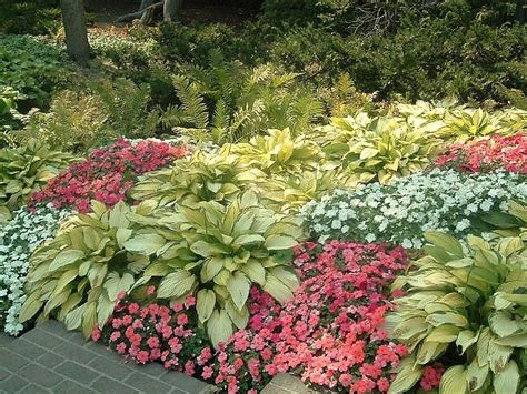 hosta garden ideas hosta garden 3 flickr photo garden ideas