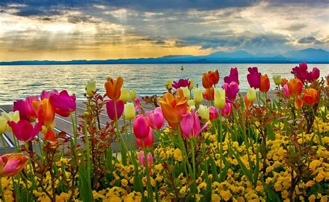 beautiful spring most beautiful spring wallpapers free download free all