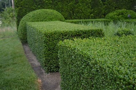 top 10 most amazing shaping trees and shrubs 2015 topteny com