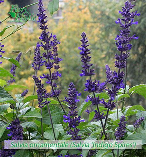 nomi fiori e piante come si chiama diamo un nome a fiori e piante fiori e