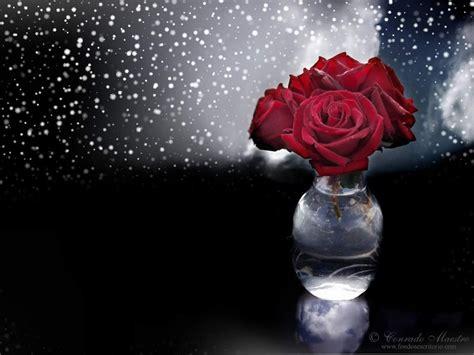 imagenes flores bellas fonditos bellas flores fotos manipuladas otros