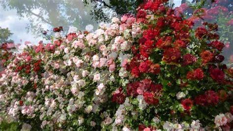 giardino delle il giardino delle