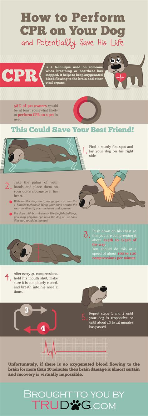 cpr dogs how to perform cpr on your