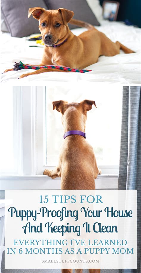 puppy proofing puppy proofing your house and keeping it clean is no easy feat with a