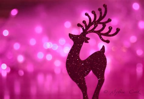 pink christmas tree lights