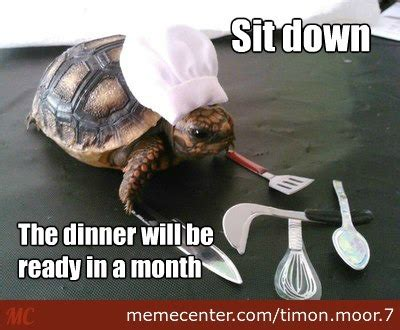Turtle Memes - turtle memes best collection of funny turtle pictures