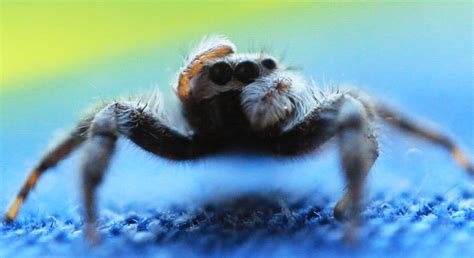 format image jpeg gif png spider cleaning it s eyes xpost from r gif awwwtf