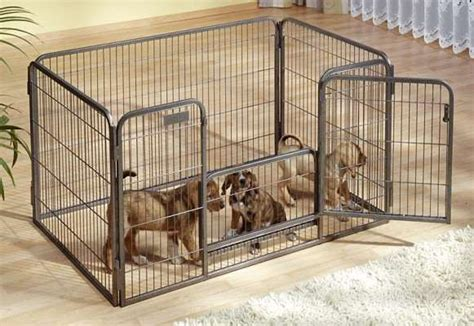animali da gabbia animali gabbia per cuccioli