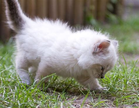 Cuuuuute And by 80 Best Cuuuuute Images On Kittens