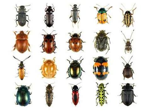 sognare insetti volanti sognare insetti significato interpretazione e numeri al