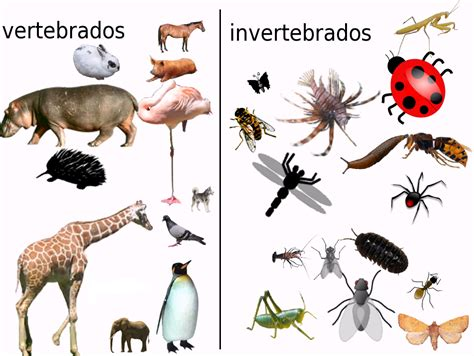 imagenes de animales vertebrados aves imagenes de animales carnivoros herbivoros y omnivoros