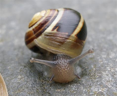 one is a snail file snail in house closeup jpg wikimedia commons