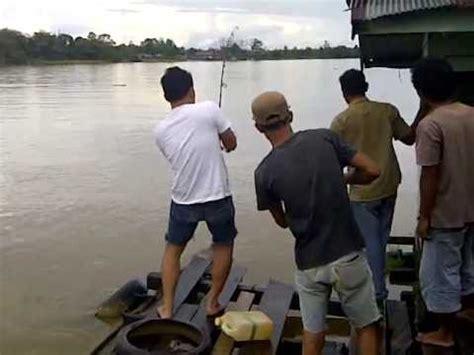 Bibit Ikan Bawal Tangerang cara ternak kelinci ternak ikan gabus