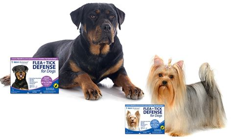 fipronil for dogs fipronil for dogs groupon goods
