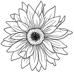 Paperwhite Flowers Drawing Blooming Aster Flower Coloring Pages Bulk Color Pinteres