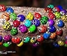 ladybug colors colorful ladybugs