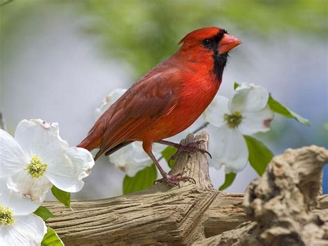 wallpapers birds wallpapers free