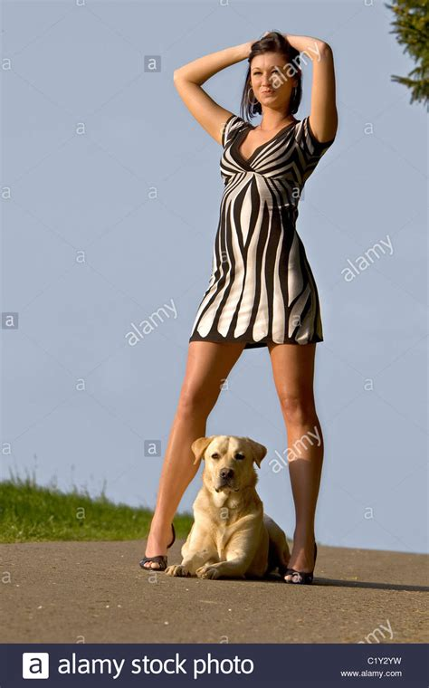 between legs labrador retriever lying between legs stock photo royalty free image 35630445