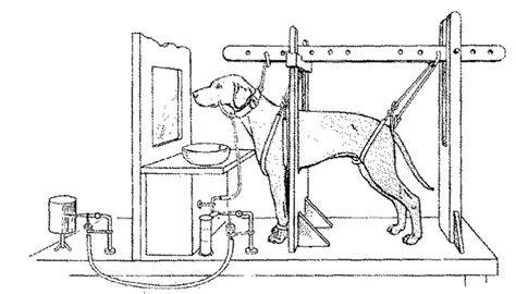 pavlov experiment pavlov s welcome to joe girard s page