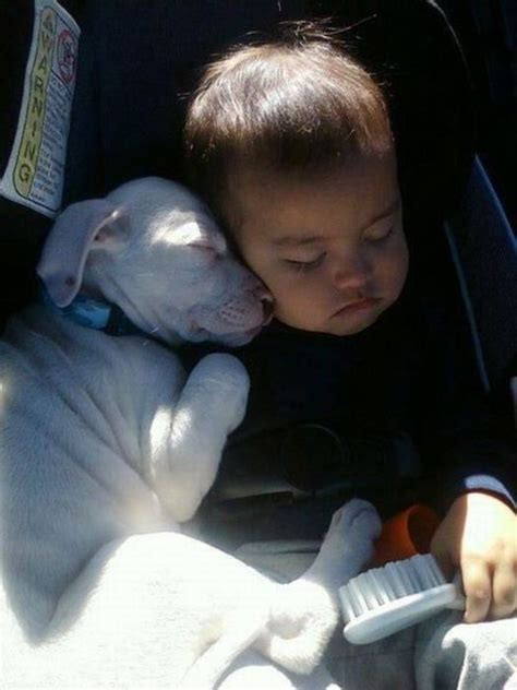 puppy and baby sleeping puppy baby 2 1funny