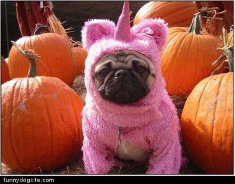 the pink pug pink pug suit funnydogsite