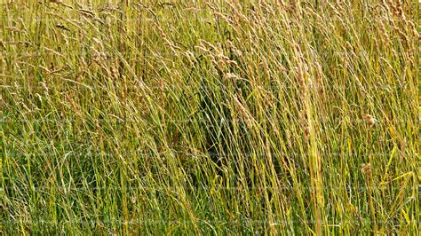 Paper From Grass - paper backgrounds green grass texture hd